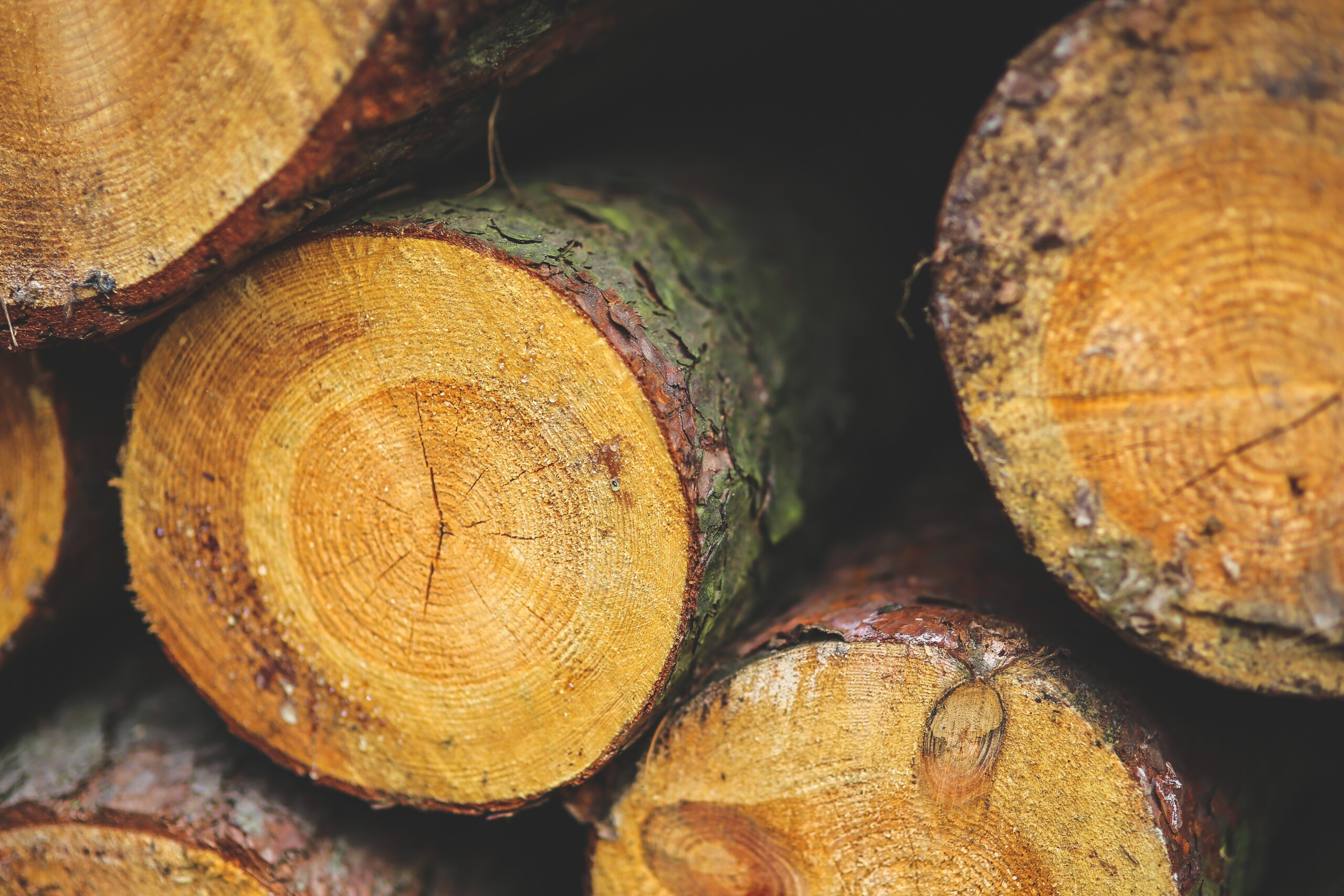 Buy a Forestry Block: Grow your own investment!