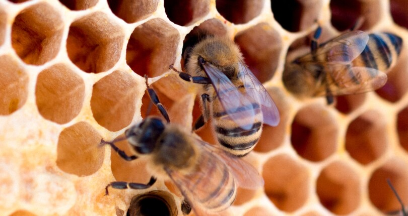 Honey Trade in Northland – Northland apiaries